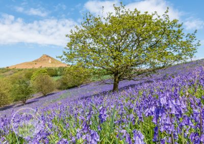 bluebell-tree-large