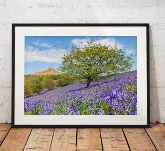 Roseberry Bluebells Tree