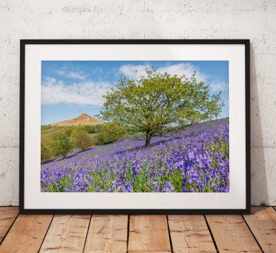 bluebell-tree-mono